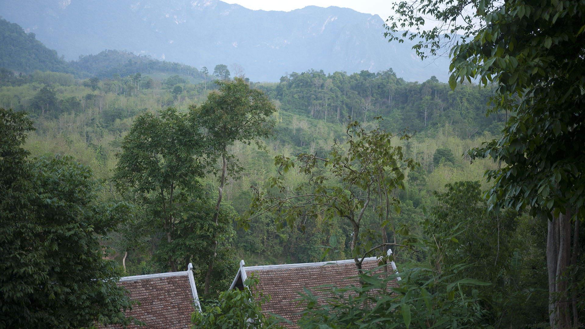 laos trees